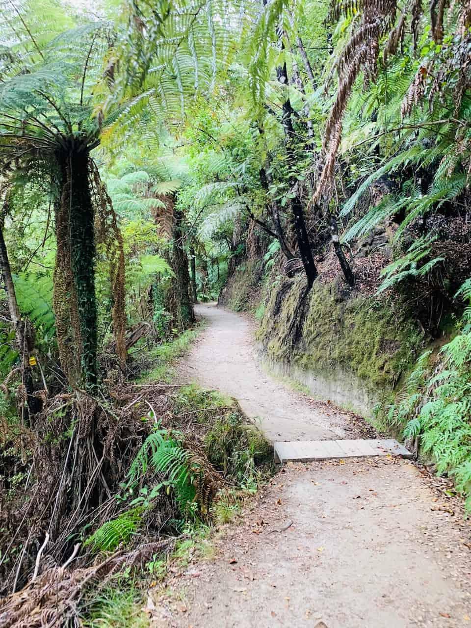Abel Tasman Track Path