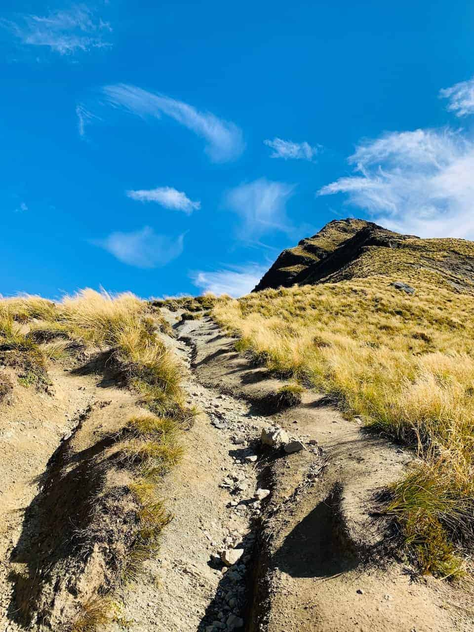 Ben Lomond Summit Path