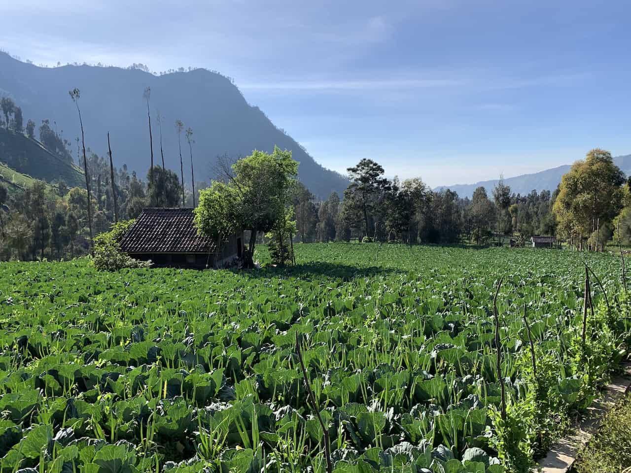 Cemoro Lawang Farms