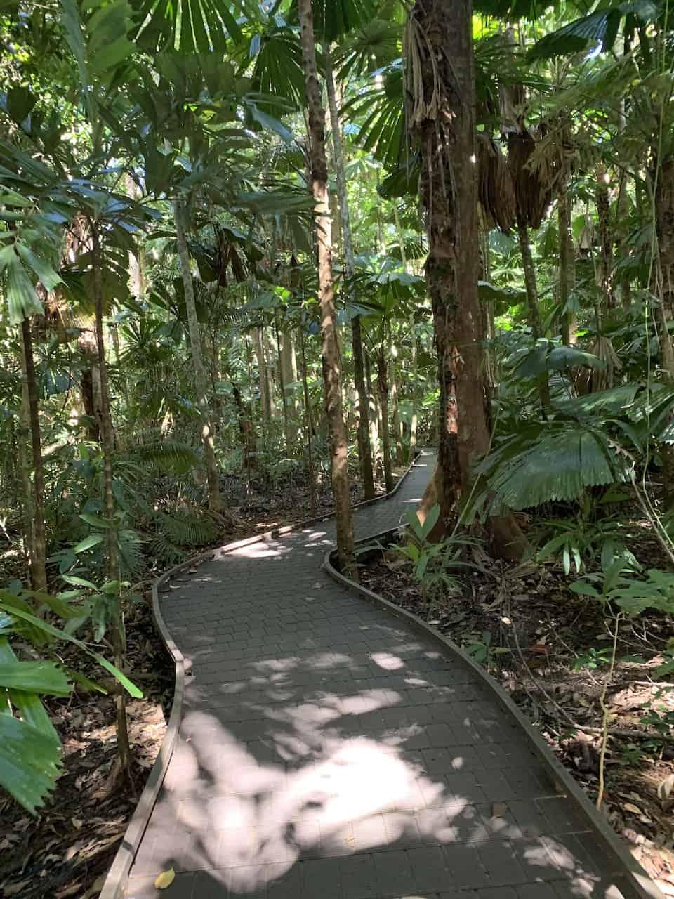 Daintree Rainforest Trees