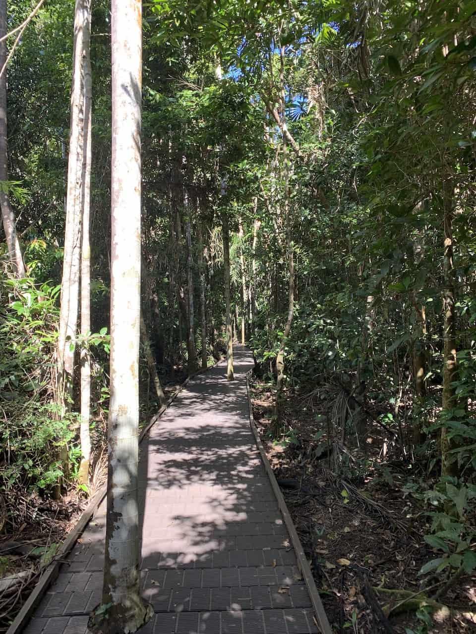 Dubuji Boardwalk Trees