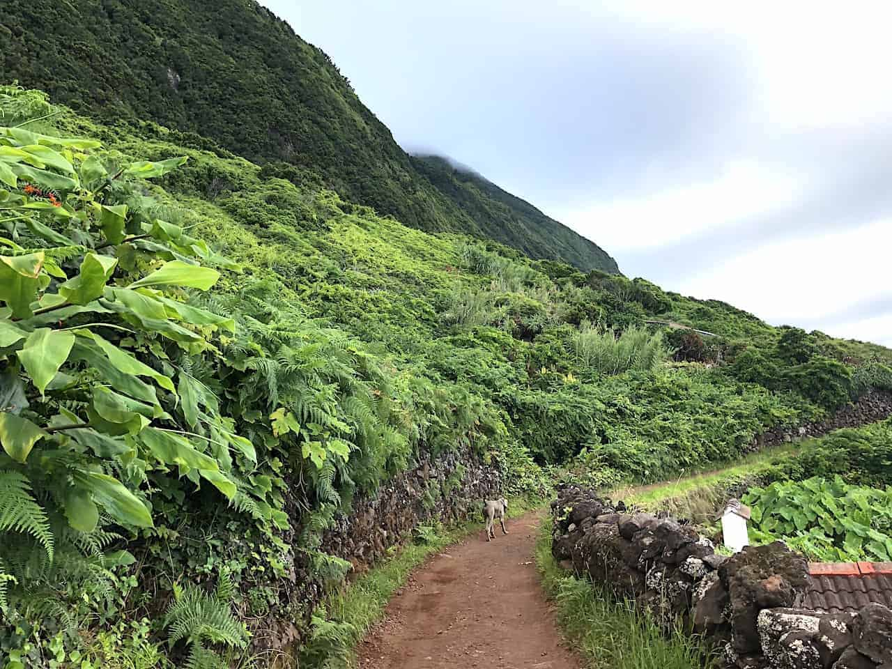 Fajã dos Cubres Trail