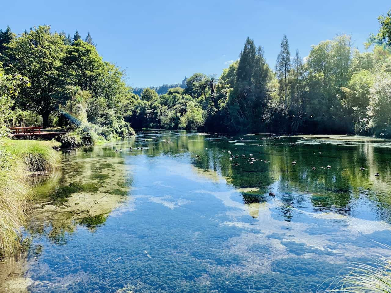 Hamurana Springs Rotorua