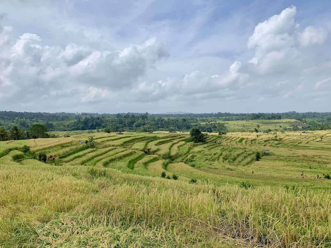 Jatiluwih Rice Terraces Indonesia