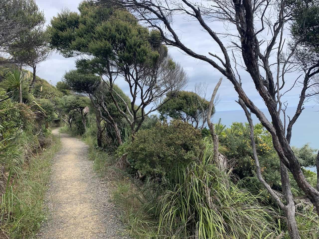 Mercer Bay Loop Dirt Path