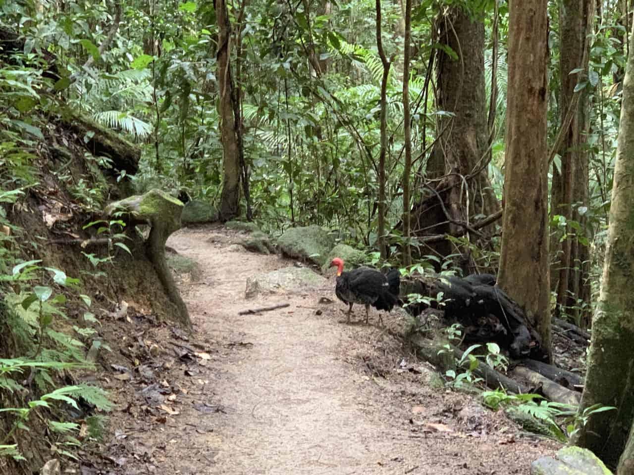 Mossman Gorge Birds
