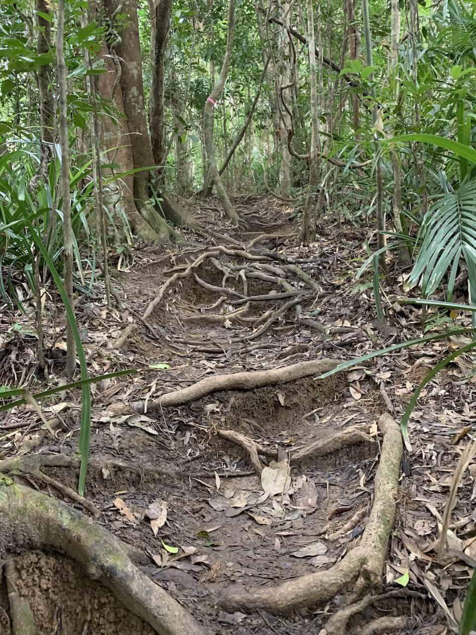 Mount Sorrow Trail