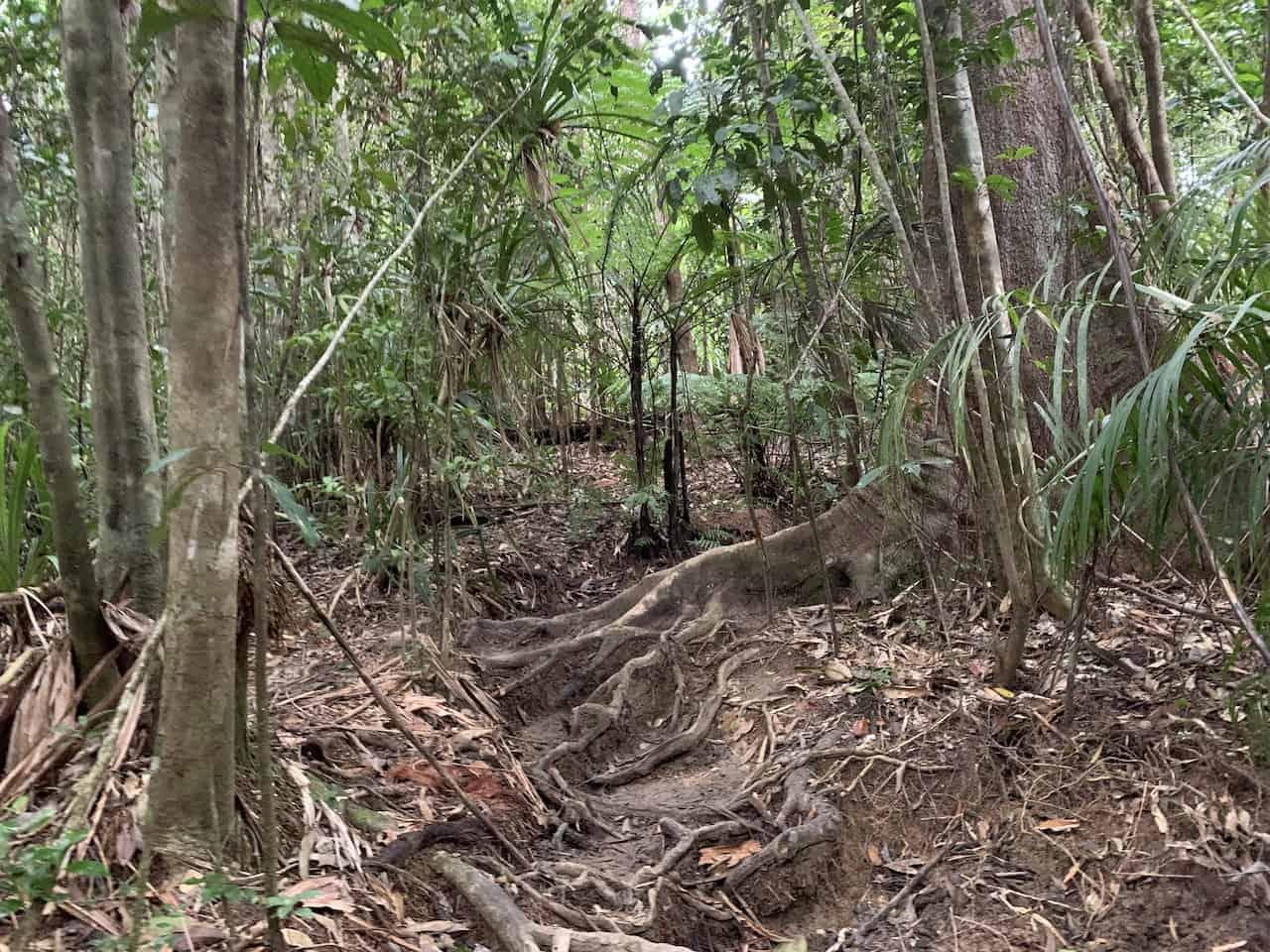 Mt Sorrow Hike