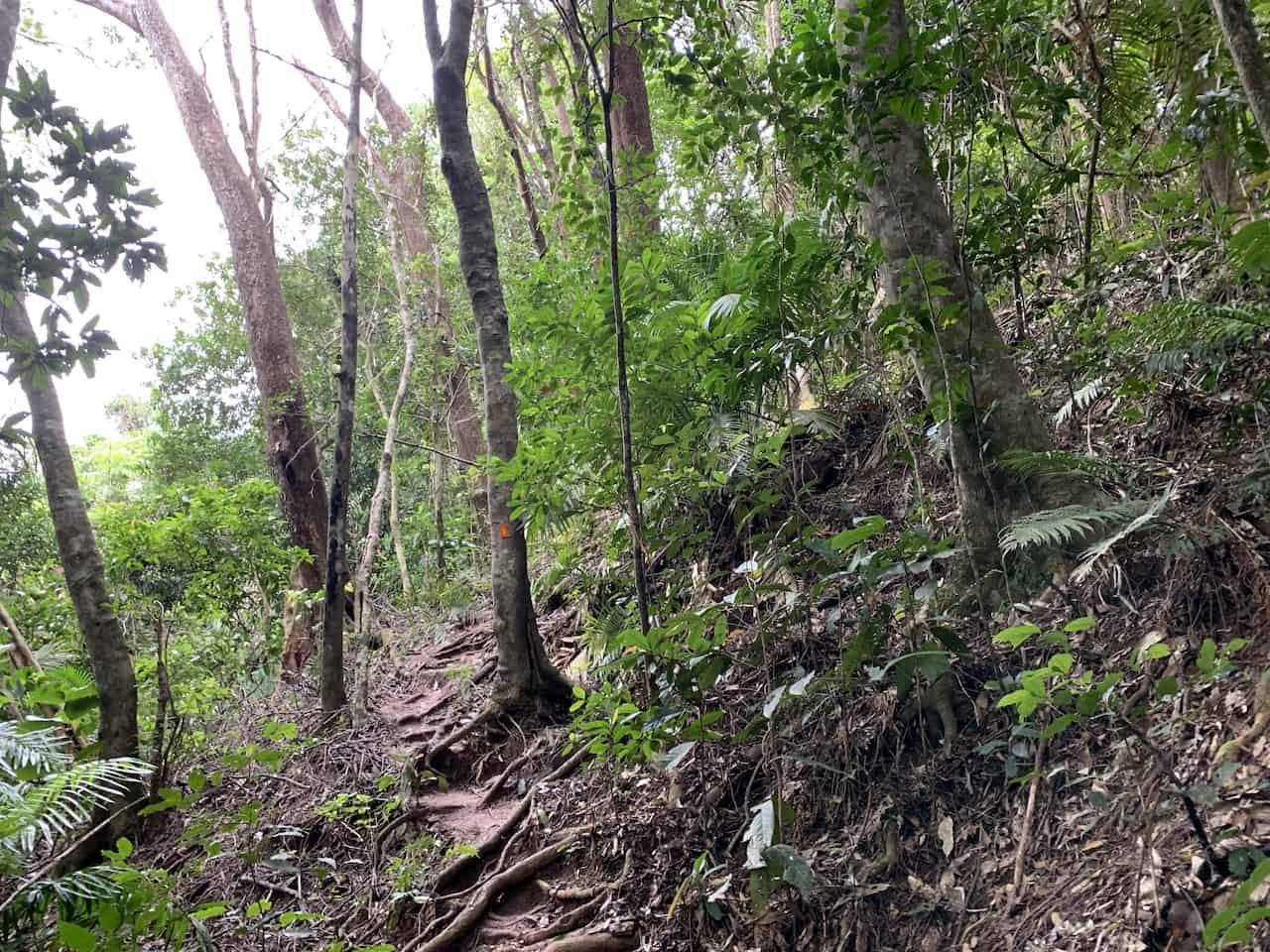 Mt Sorrow Trail