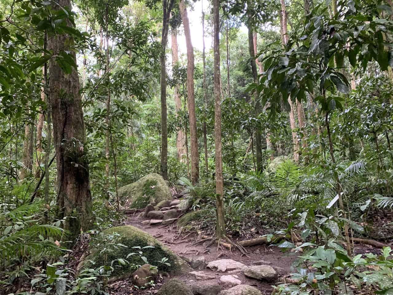 Rainforest Circuit Track