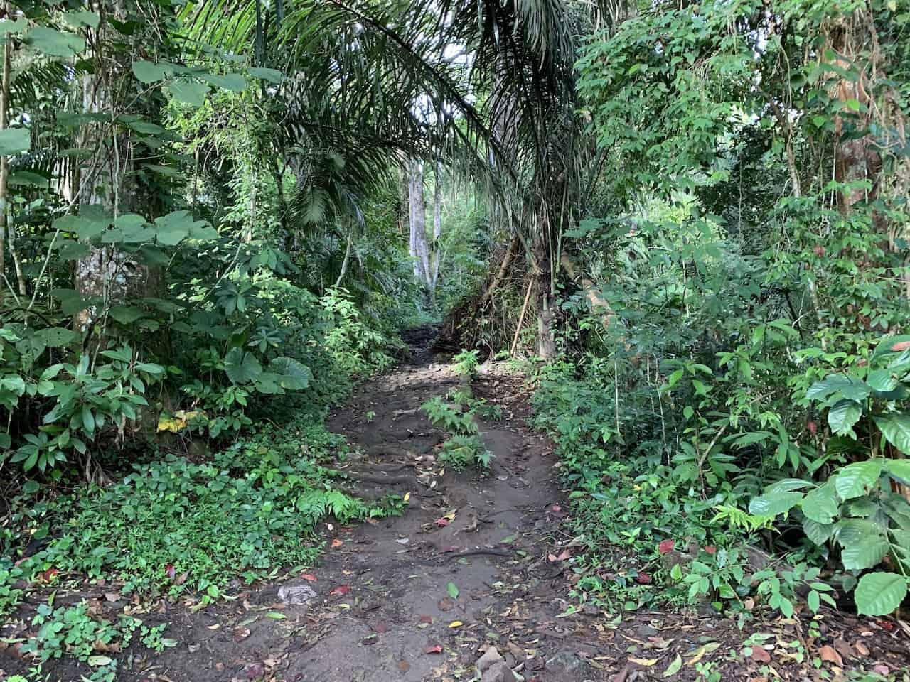 Rinjani Forest