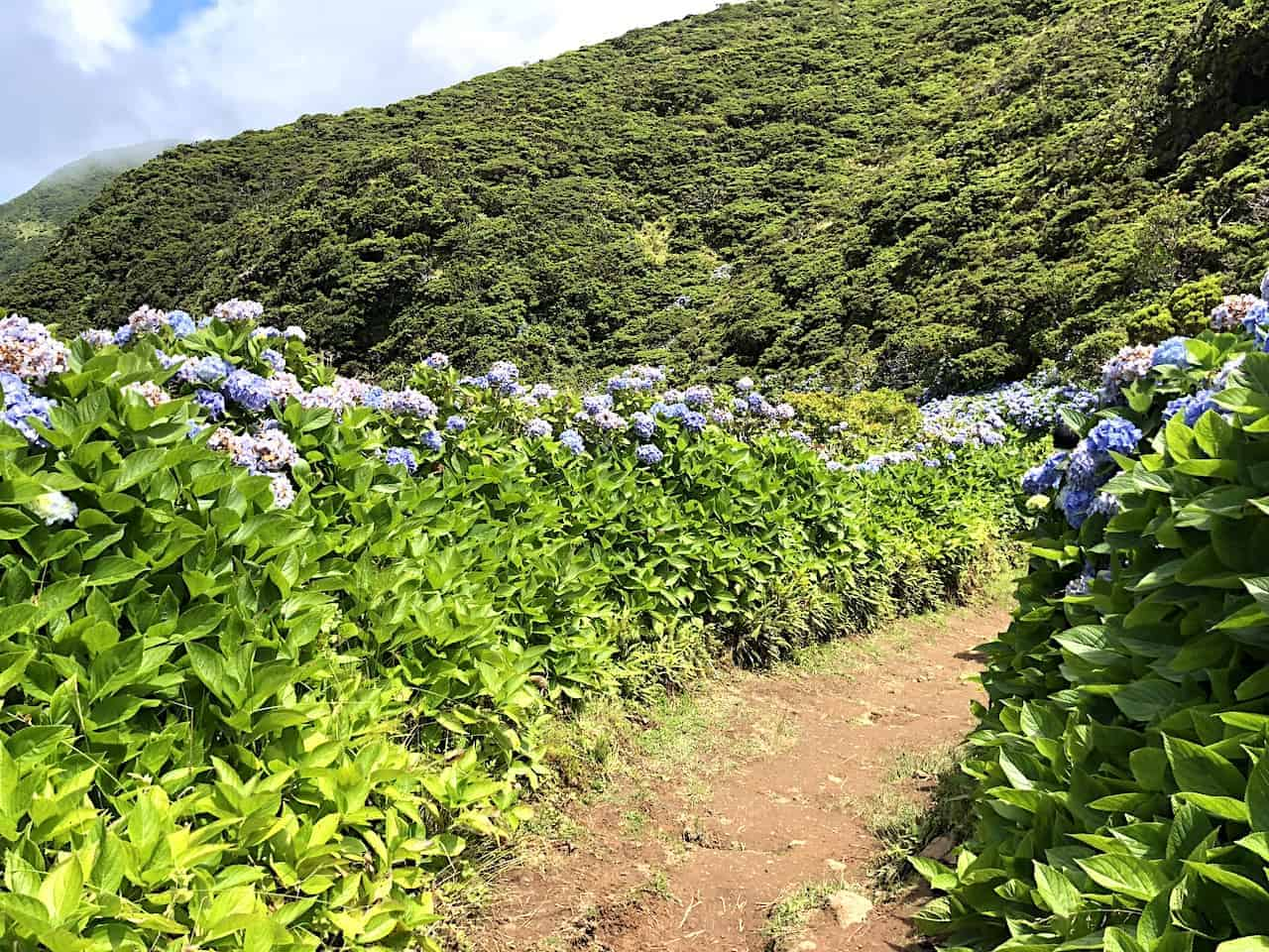 Sao Jorge Hiking Flowers