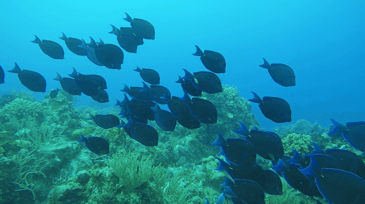 Scuba Diving Cancun Fish