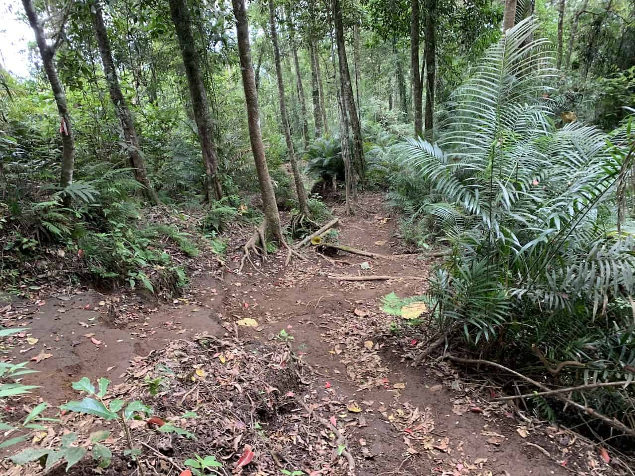 Senaru Trek Downhill Path