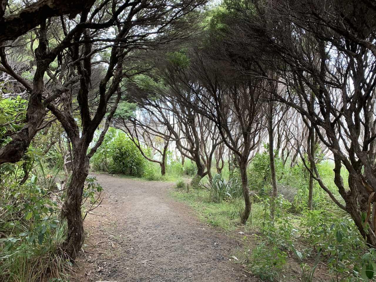 Waitakere Trees