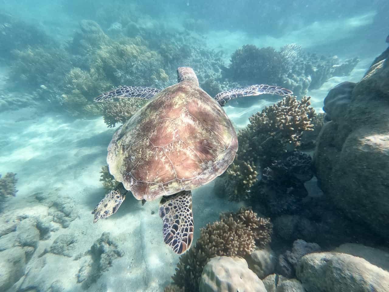 Whitsundays Snorkeling Turtles