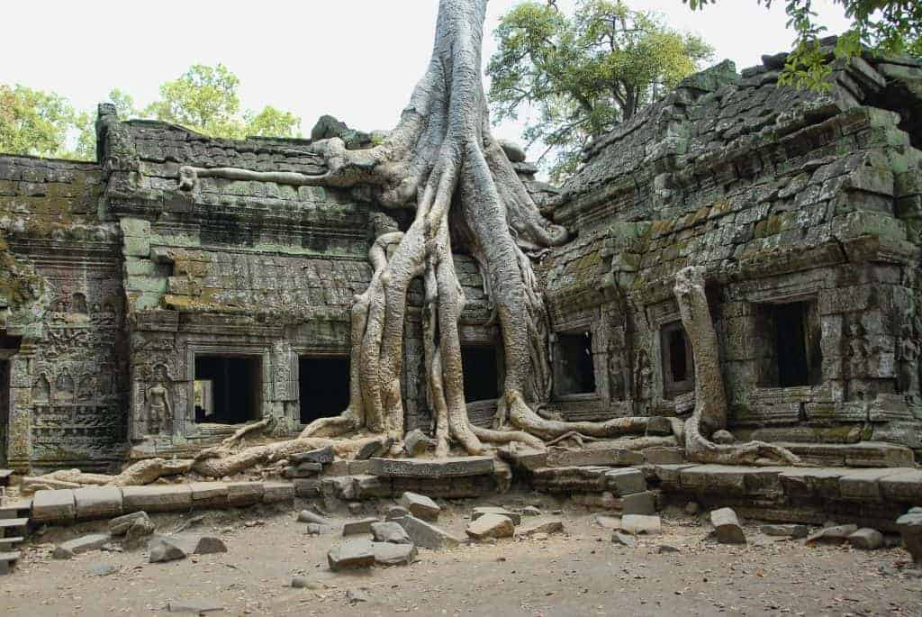 Angkor Wat Ta Prohm Tree