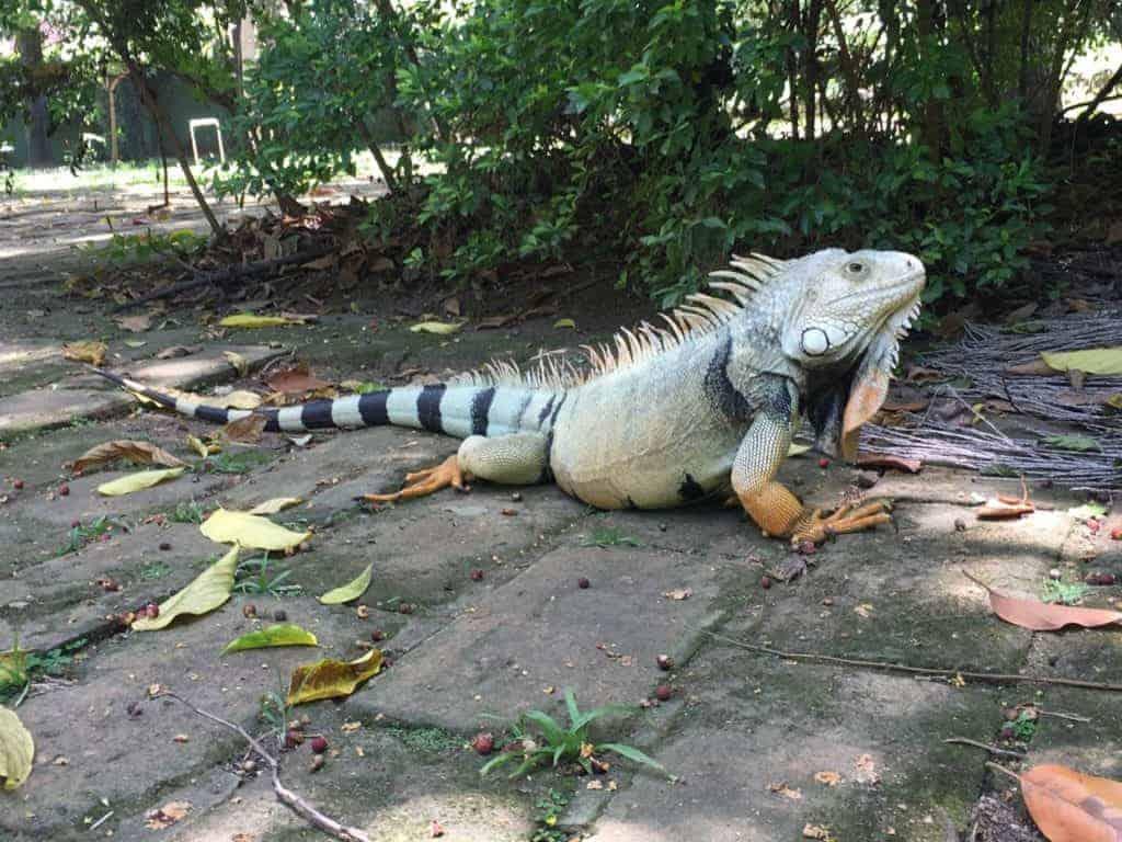 Jardin Botanique Iguana