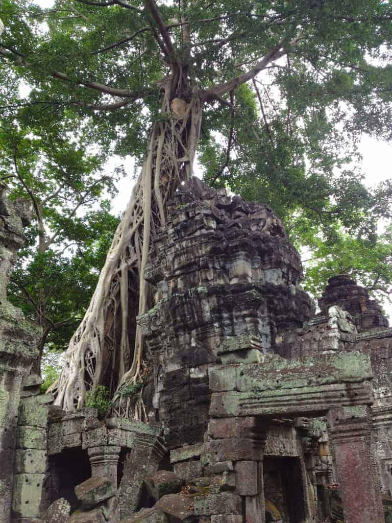 Ta Prohm Angkor Wat Tree