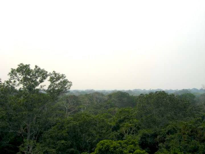 Amazon Canopy View
