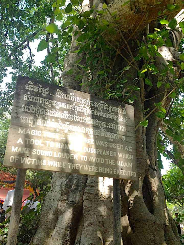 Choeung Ek Killing Fields Tree