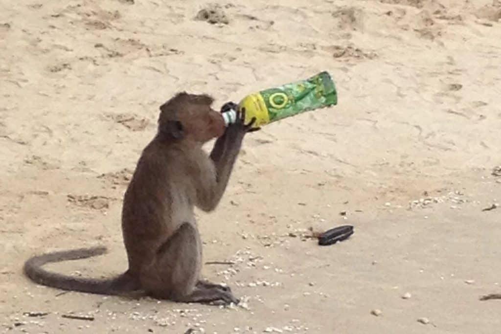 Halong Bay Monkey Island
