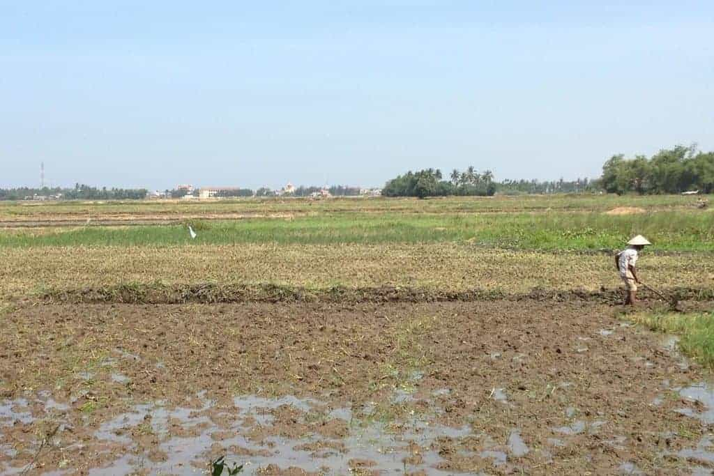 Hoi An Fields
