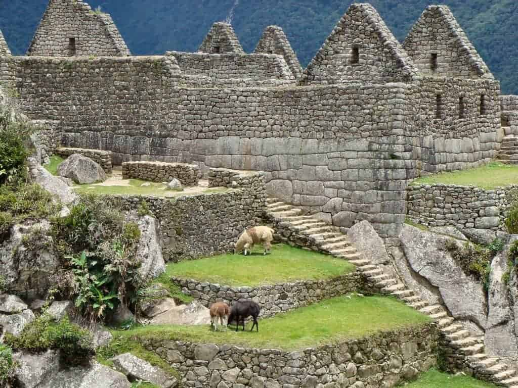 Machu Picchu Animals