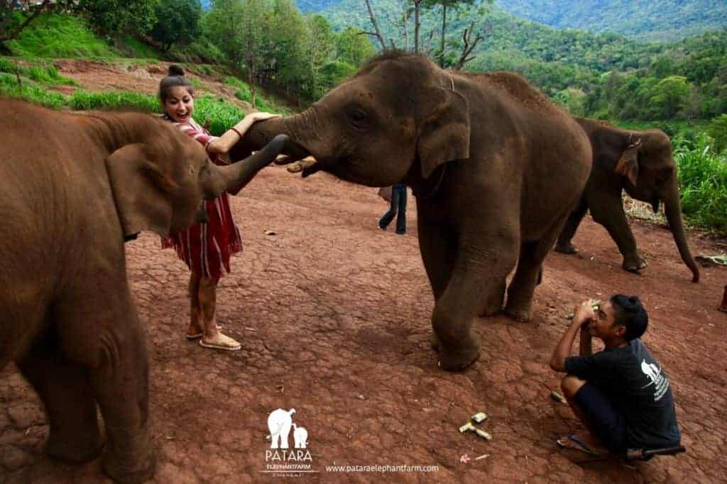 Best Elephant Sanctuary Chiang Mai