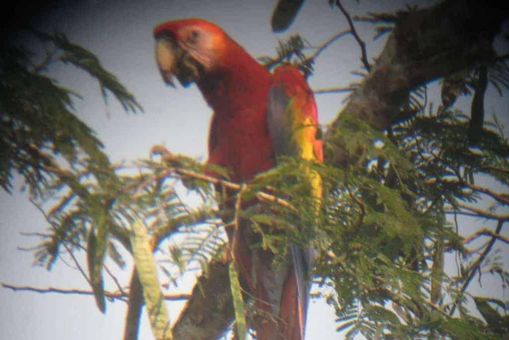 Refugio Amazonas Bird