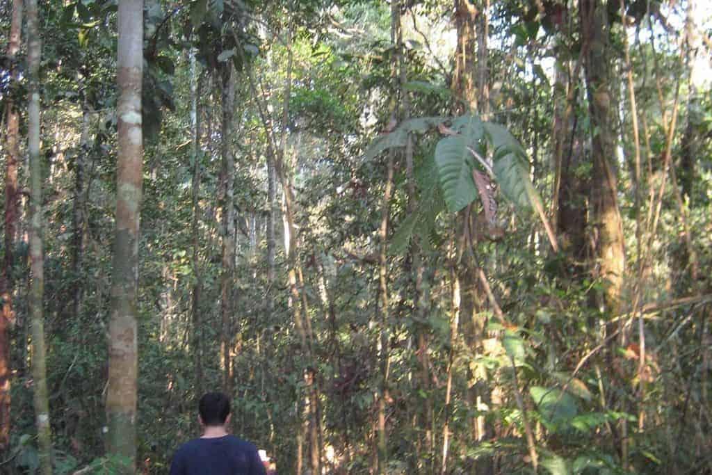 Refugio Amazonas Trek
