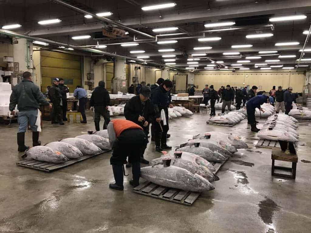 Tsujiki Fish Tuna Auction