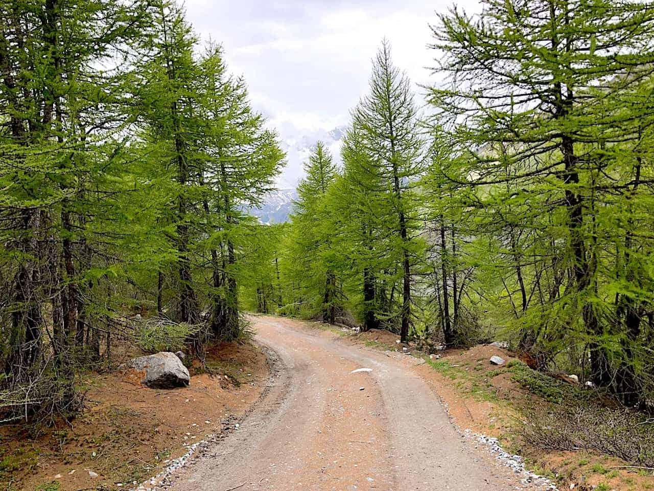 Five Lakes Hike Tree Path