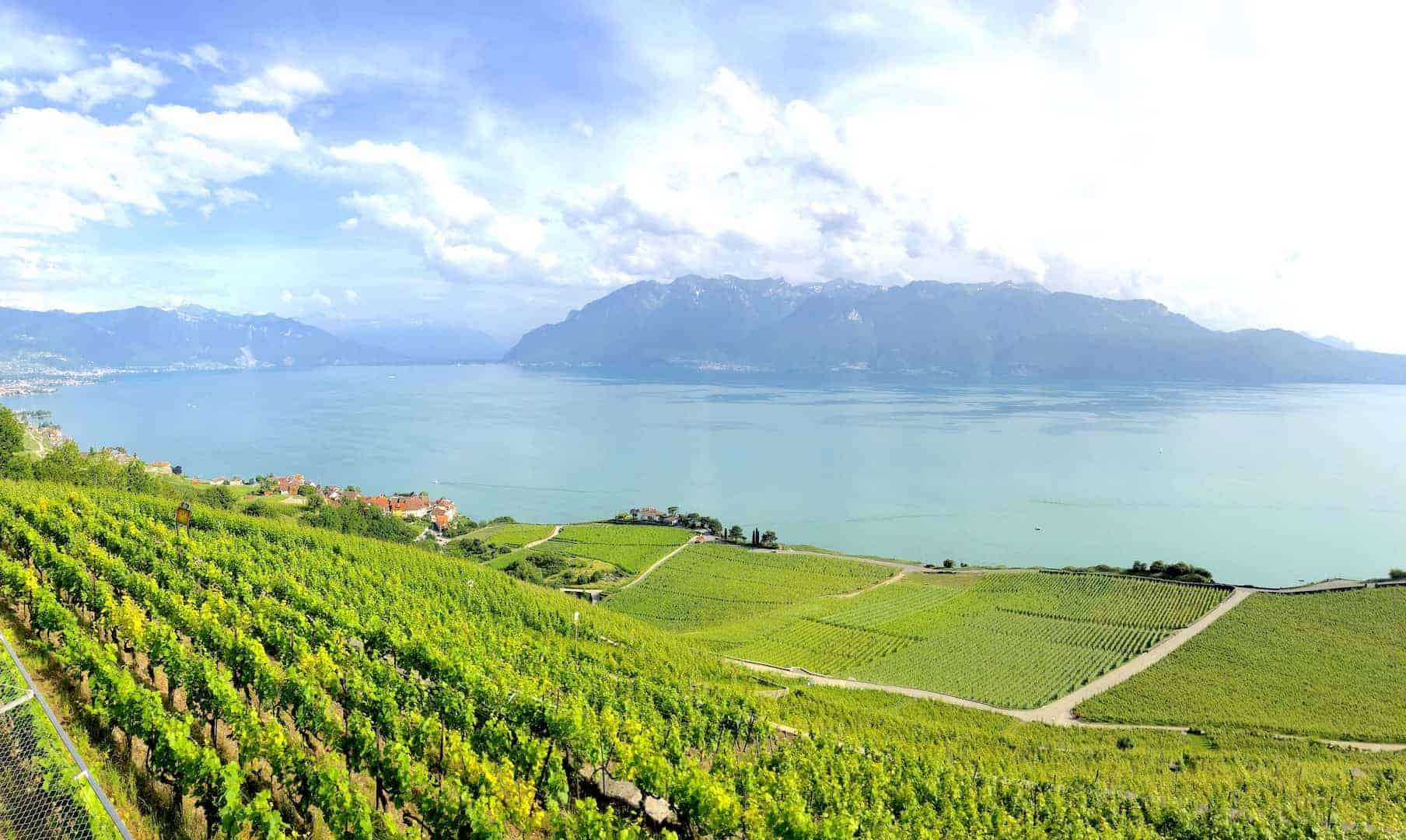 Lavaux Vineyards 3