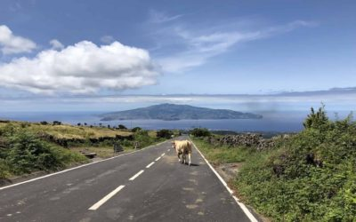 Azores Driving Guide