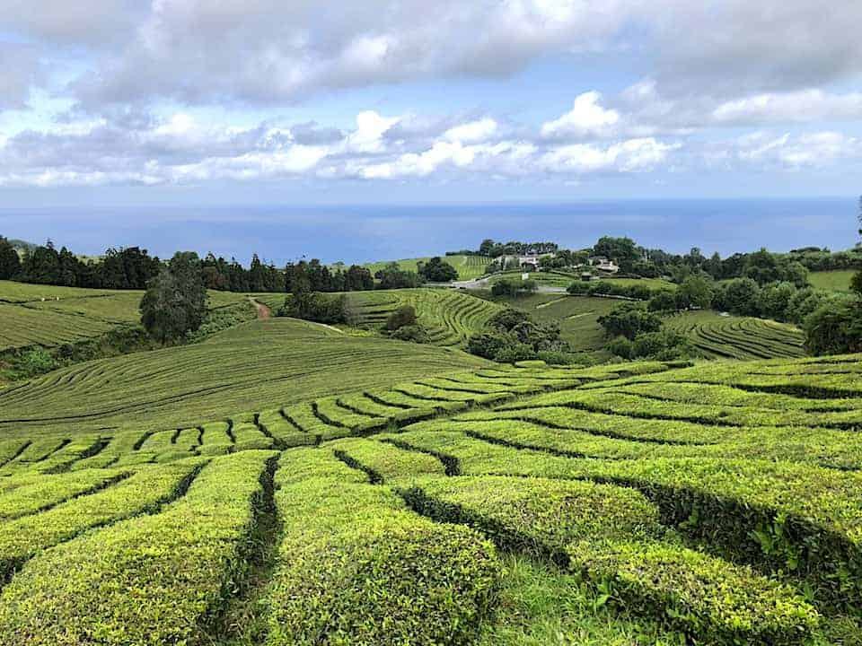Gorreana Tea Plantation Hike