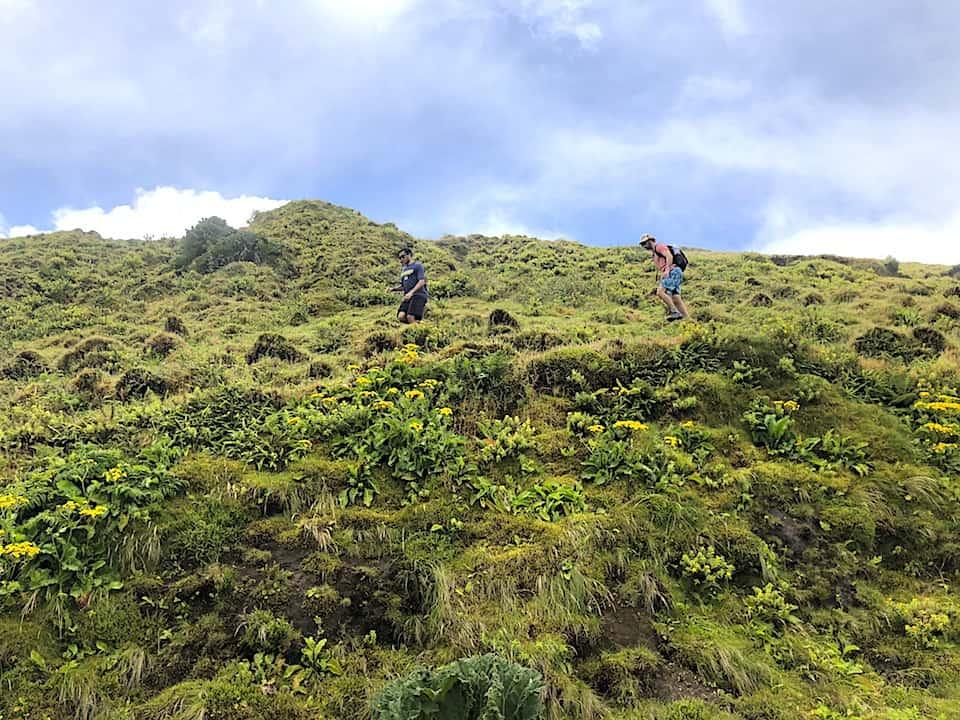 Mata do Canario Sete Cidades Hike Green