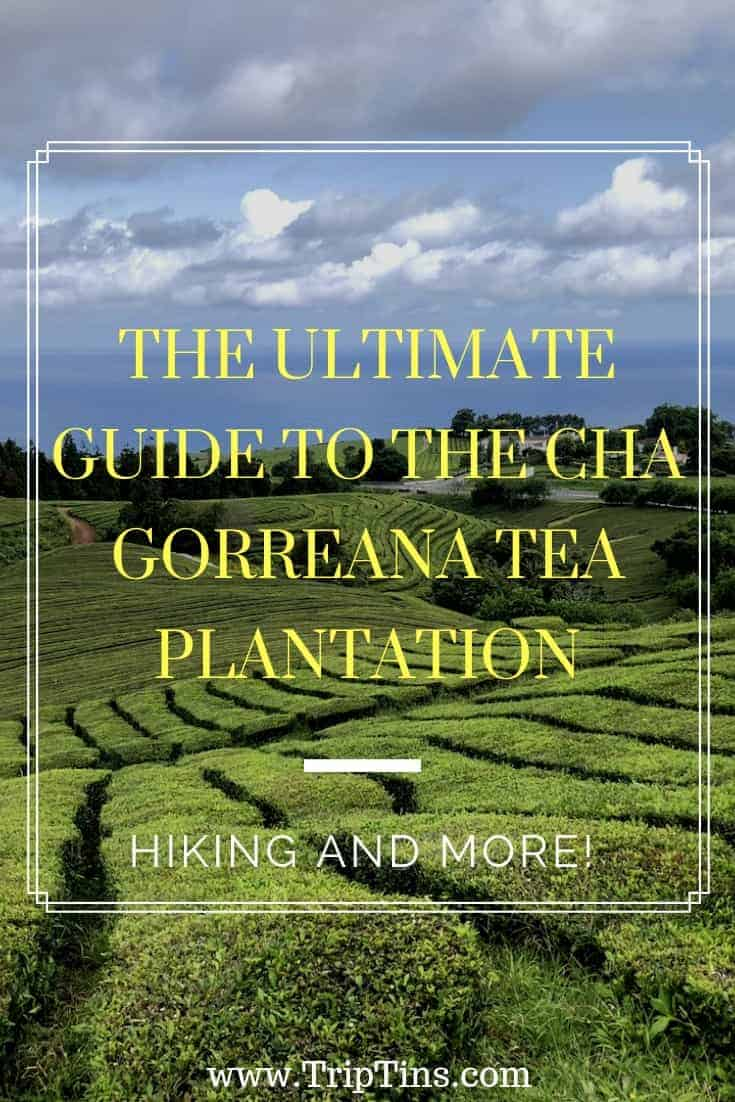 Cha Gorreana Tea Plantation