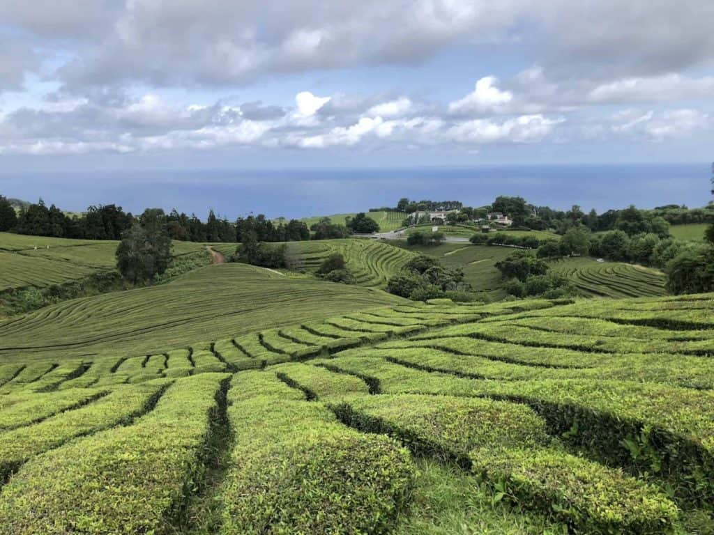 Cha Gorreana Tea Plantation Guide
