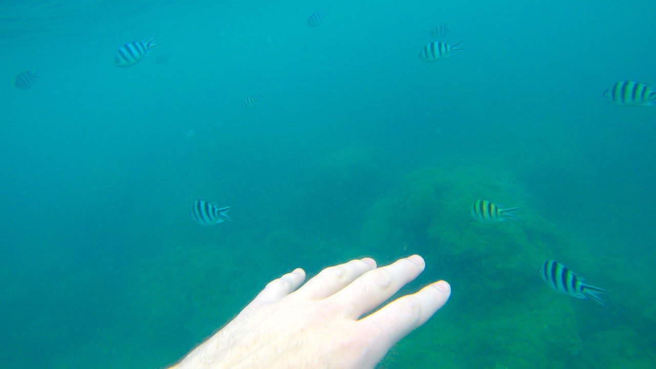 Koh Ma Snorkeling