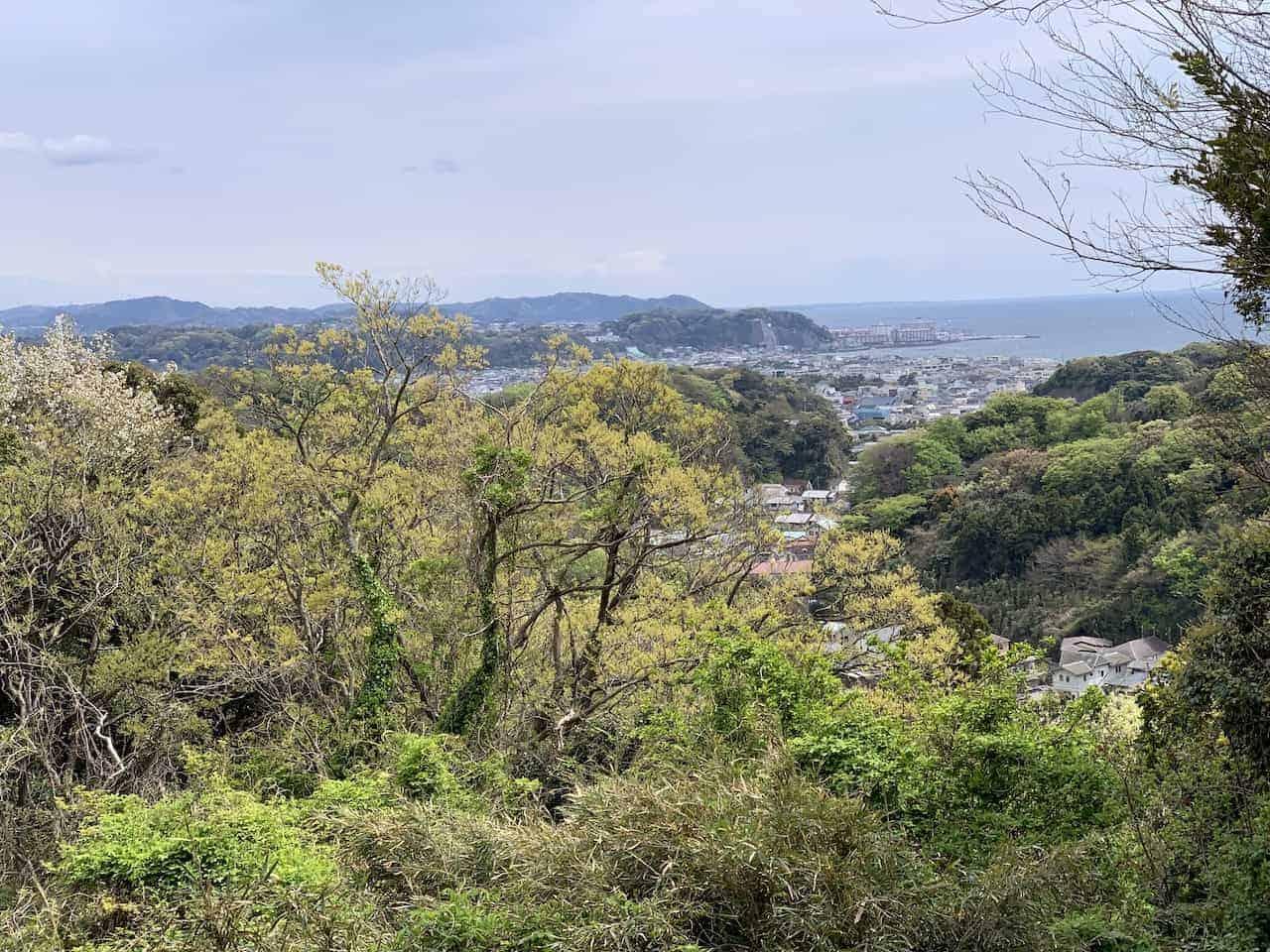 Kamakura Forest Views