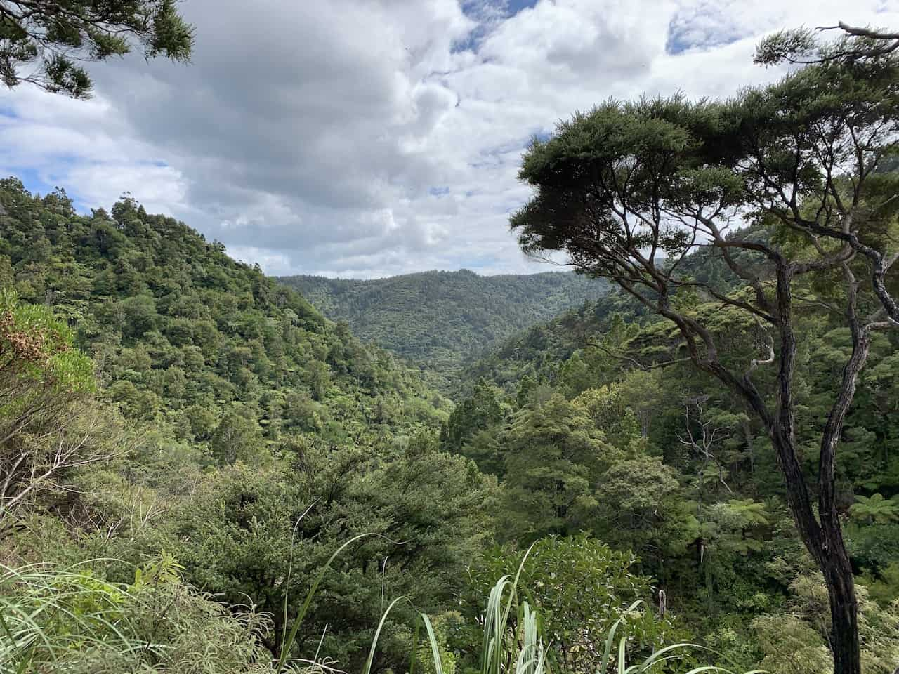 Waitakere Ranges Forest