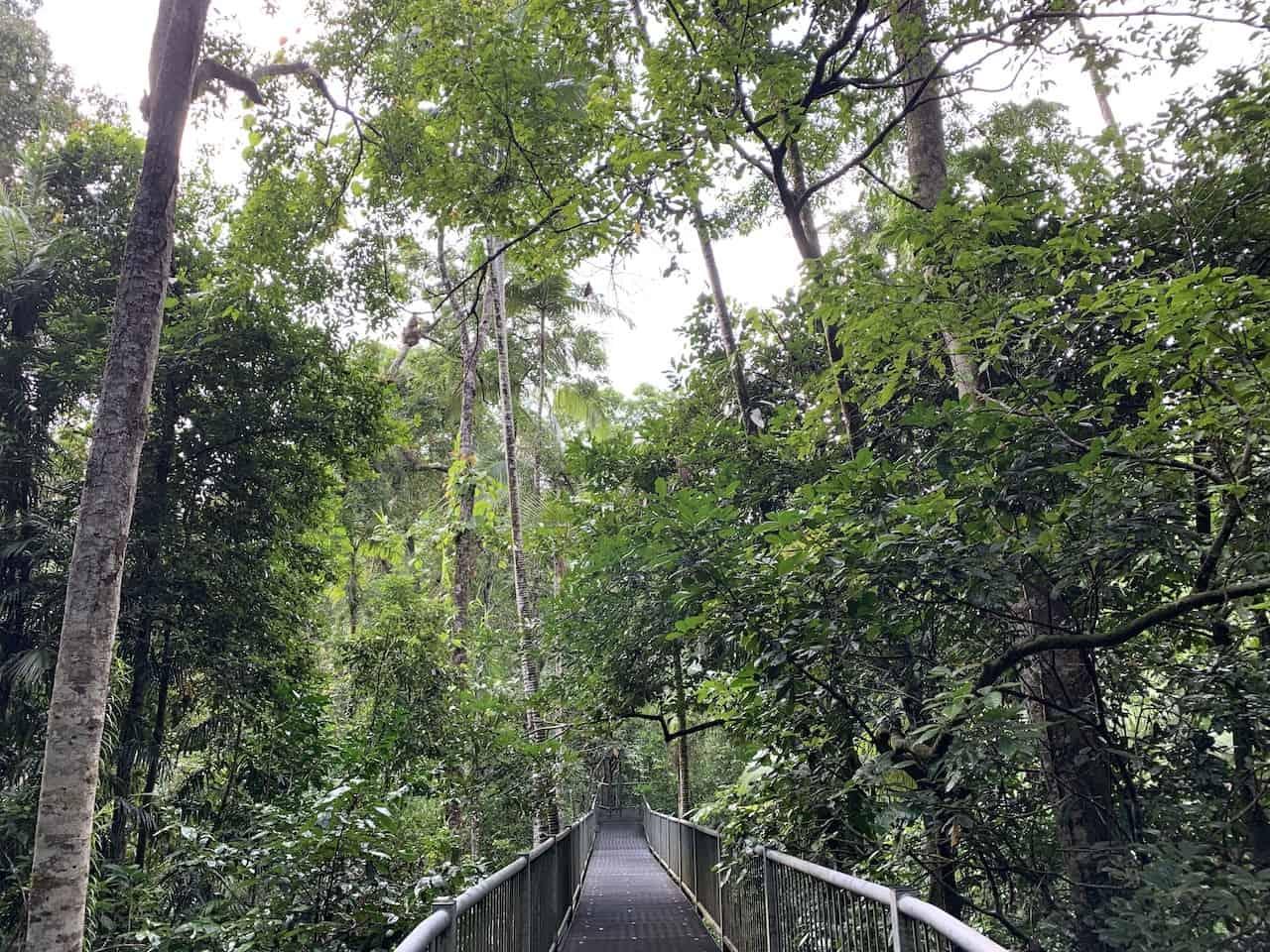 Aerial Walkway Daintree Discovery