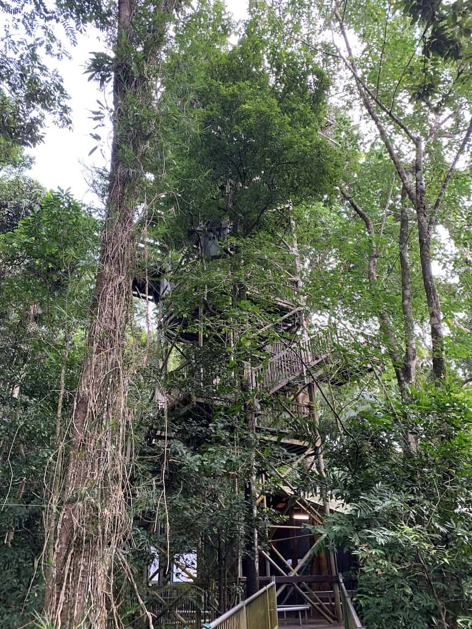Canopy Tower Daintree