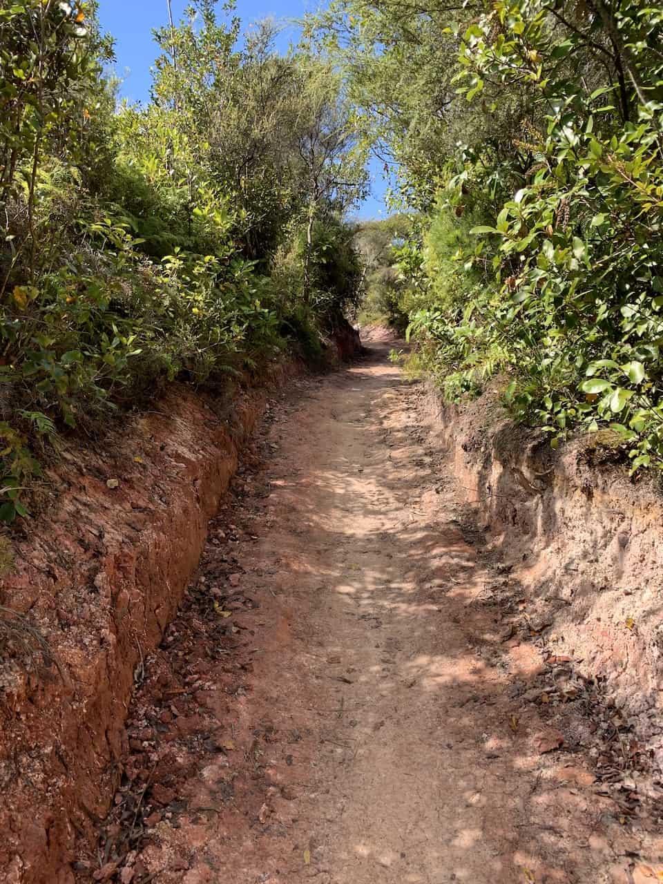 Rainbow Mountain Rotorua Path