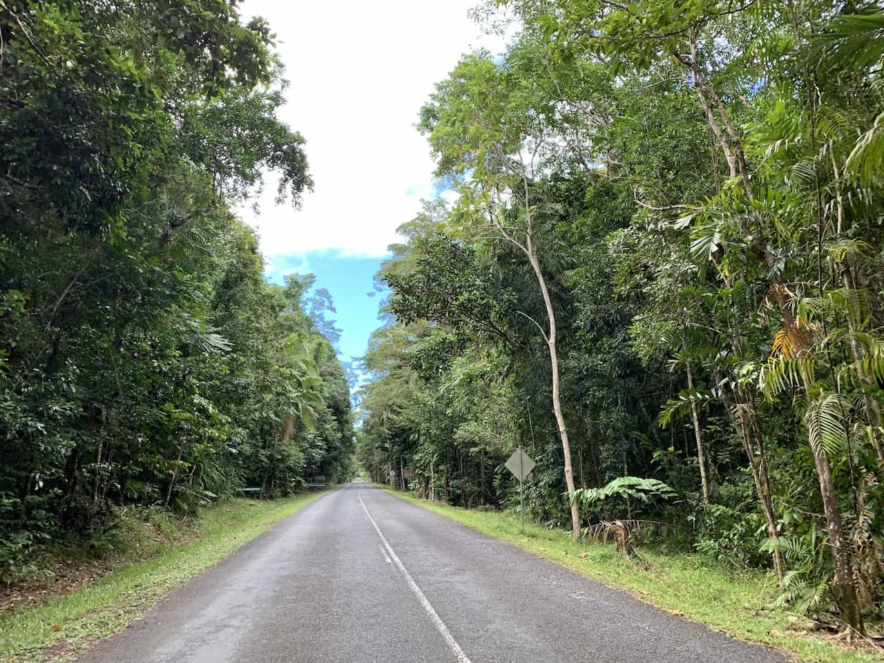 Daintree Driving