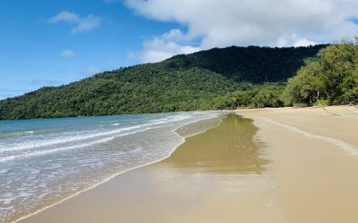 A DIY Daintree Rainforest Tour | A Complete Daintree Guide & Itinerary