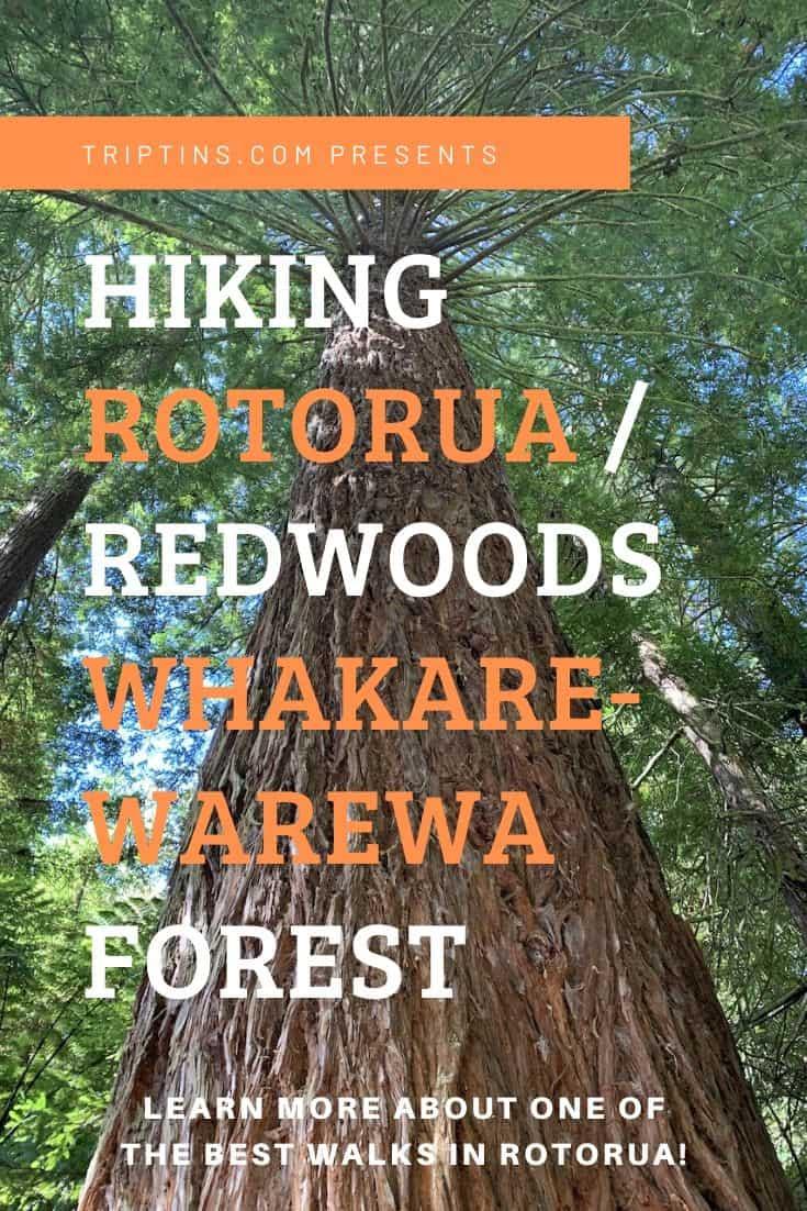 Rotorua Walks Redwoods