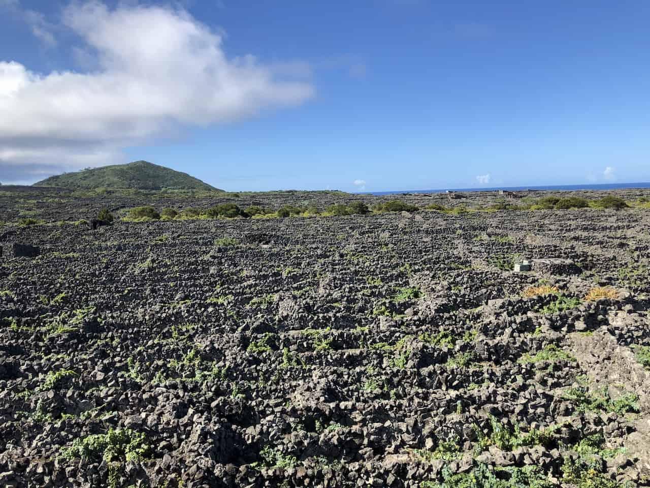 Azores Vineyard Pico