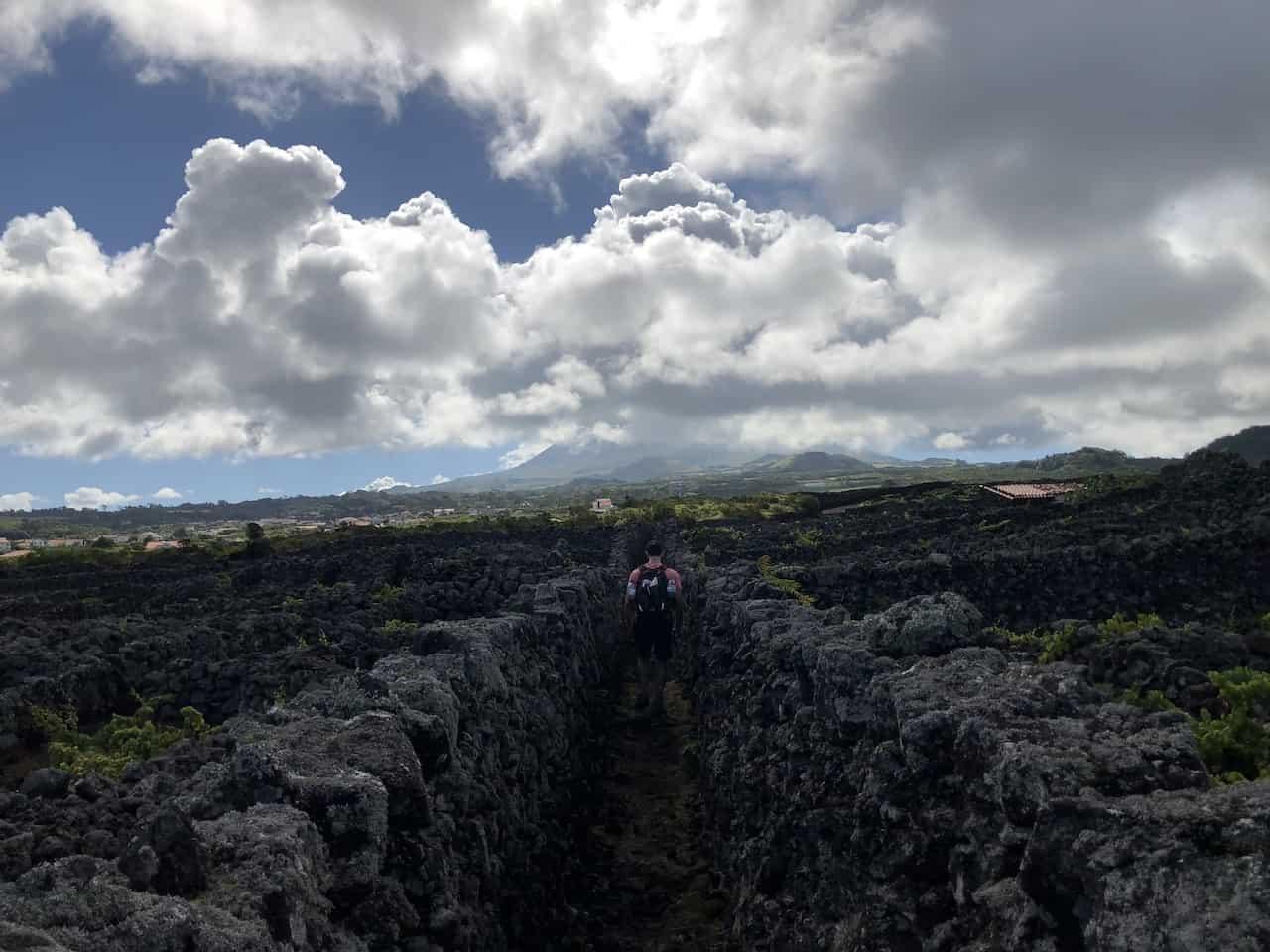 Mount Pico Vineyard
